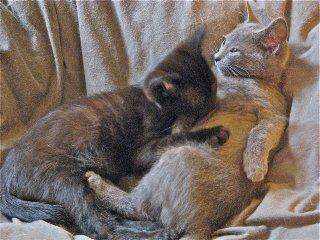 MAFA Kittens
