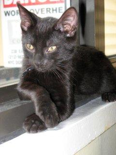 MAFA Kitten