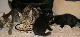 Astrid and her kittens