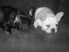 Freddie and Barney