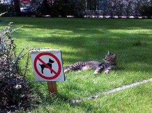Cat-noDog