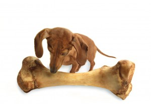 Dog with Giant Bone