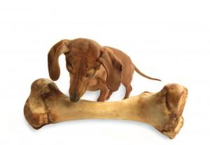 Dog with Giant Bone