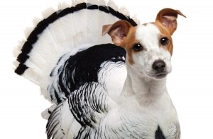 turkey dog peta