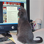 Brook browses the Mayor's Alliance website in search of an adopter.