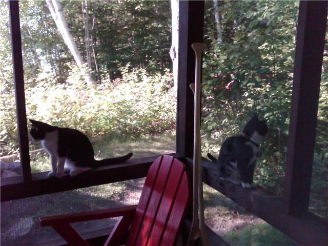 Ginger & Gibby in the Adirondacks
