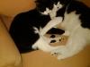 Ginger and Gibby